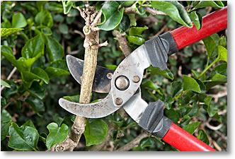 Tree & Shrub Trimming Service
